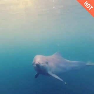 可爱的海豚<span class=