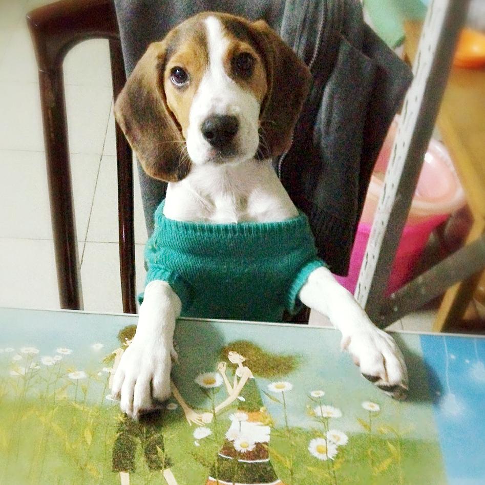 宠物#等着吃饭呵呵