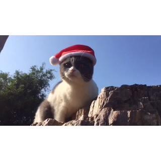 山上偶遇圣诞喵🎅喵妹在此提前祝大家#圣诞快乐#天天好心情🌹#宠物##宠物装扮大赛#
