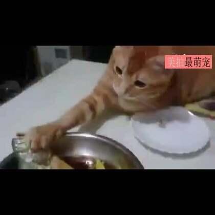 #宠物##逗比#我就摸摸,又不吃,你咋这么小气呢!😂😂