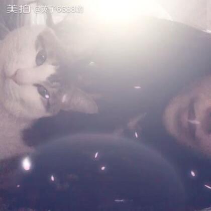 #我和我家猫星人##家有喵星人##家有萌宝#有没有觉得我们两个表情神同步,哈哈我写字它盯着,一直坐我旁边,太粘人了😀