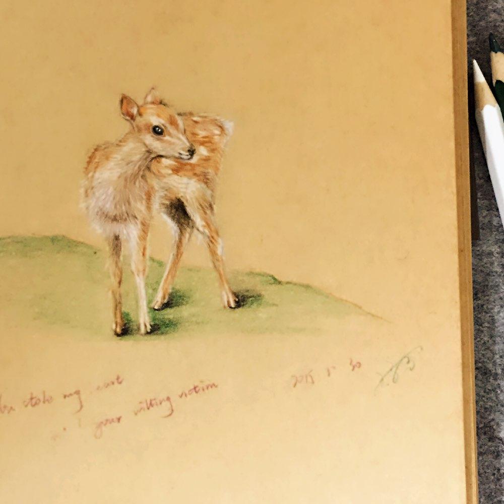 鹿,灵也 #手绘彩铅画##爱画画的孩子运气都不会太差##我还在画画