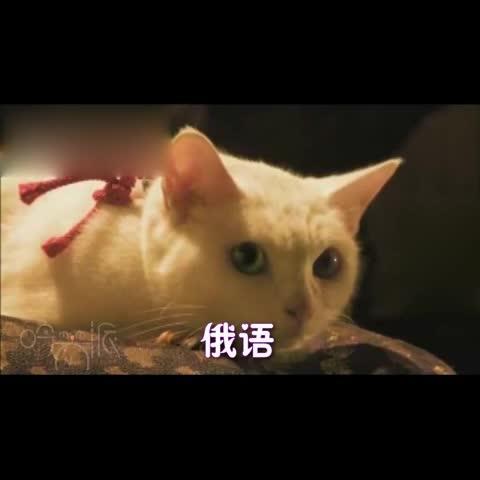 猫咪搞笑图片相关图片下载