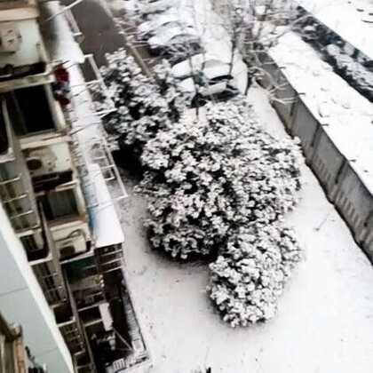 又下雪啦,好想去爬紫金山😭😭😭