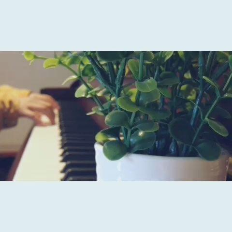鹿晗勋章钢琴简谱
