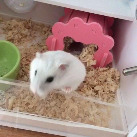 仓鼠不爱吃东西总是睡觉怎么办?图片