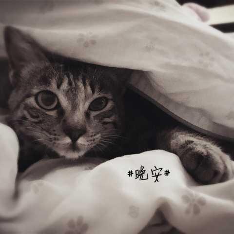 晚安带字动物图片