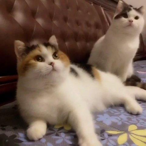 动物宠物猫萌萌