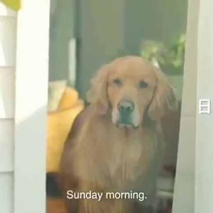 #宠物#Amazon Japan的广告片,刚出生的宝宝本来害怕家里的大金毛,结果意外的暖萌,被金毛的眼神感动到。。💘