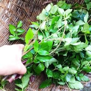 #村姑#家的日常,今天到上山找了#野菜#,做了#美味#的豆豉炒野芹菜,豆豉是我妈妈自己做的很香呢!已经好久没吃到这么好吃的#美食#啦!!!#绿色食品#无污染的哟😄😄😄