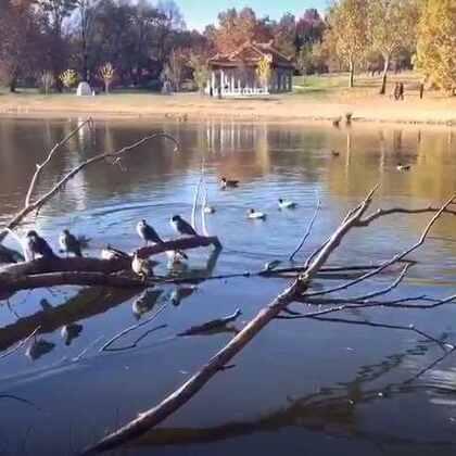#美拍大师##旅行##随手美拍##旅画映像#某个周日的午后,我坐在湖边数鸭子……