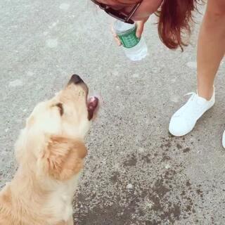 #花式喝水挑战#不要喷俺 大马路上没有杯子 没有男朋友我还不能和狗秀个恩爱😝#宠物金毛#
