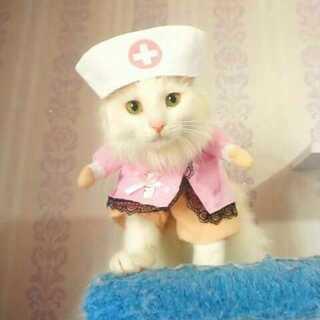 可爱的猫护士来啦😍有没有找美可护士打针的啊😂😂#宠物##宠物制服诱惑##宠物装扮大赛#
