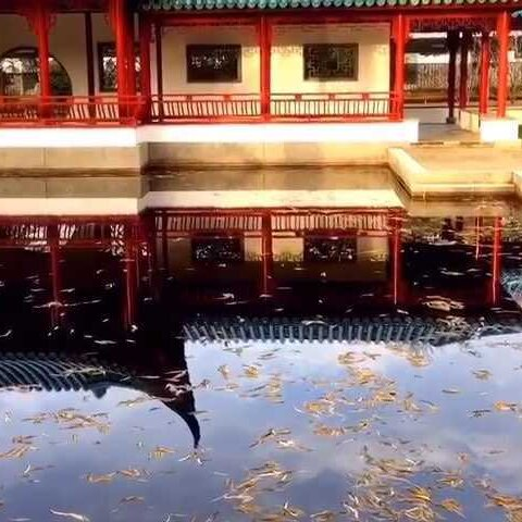 【旅画leeloo美拍】#旅画映像##澳洲##堪培拉#中国驻...