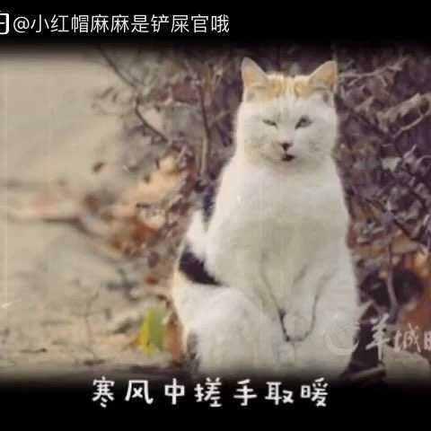 #关爱流浪动物##宠物#冬天来了,流浪猫狗饥寒