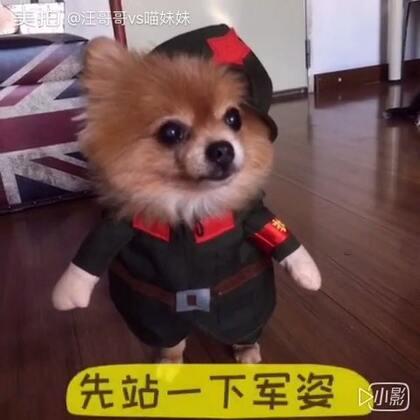 我是一个兵[悠闲]我仔仔对着鸡肉干庄严宣誓✊自愿加入狗狗护卫队🤗忠于祖国、忠于方家……保家护院💪不服来挑战🤔😆🙅#宠物##宠物制服诱惑#