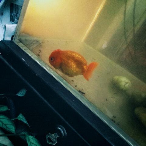 看来鱼还真的睁着眼睛睡觉啊!y(