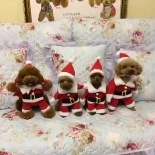 #宠物##萌宠圣诞cosplay#一群圣诞🎅🏻汪来袭~
