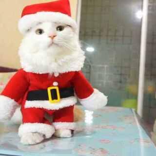 #萌宠圣诞cosplay#超萌圣诞猫爪舞😜😜,还有一个非洲来的圣诞宝宝😂#宠物##圣诞节#最近好多小伙伴问怎么不见黛妮了,很感动这么多人关心黛妮小宝贝,黛妮被长辈接走了,以后就是养美可和杰森了,养猫成双,一男一女,挺好!暂时只有时间养两只,每养一只都是责任,需要悉心照顾,爱大家么么😘
