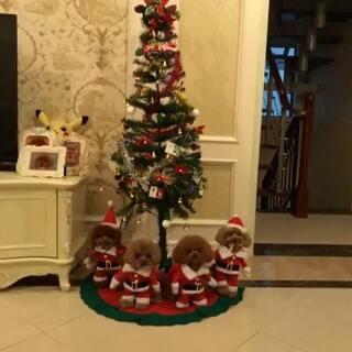 #宠物##萌宠圣诞cosplay##圣诞节#马上又是圣诞节啦,四个宝贝提前祝福大家圣诞节快乐😘感谢一年又一年的陪伴,时光不老我们不散🙈