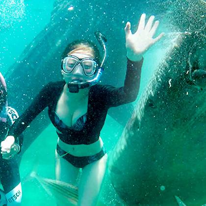 今天上午我们去奥斯洛布,在体型巨大的鲸鲨身旁浮潜,下午观赏了超美的沙丁鱼风暴!#粉妞妞和小吉利宿务薄荷岛游#DAY5,🎉老规矩!关注+评论+转发,抽500元!👉友情提示:这期结尾有特别大的惊喜!如果你也想去宿务,还想走粉妞妞和小吉利的同款路线,可以点击http://dwz.cn/4U6zJL购买哦!