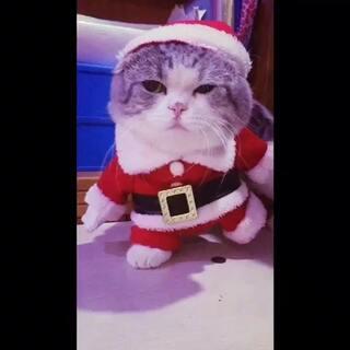 #宠物##萌宠圣诞cosplay##圣诞祝福逗拍秀#