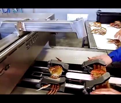 高科技螃蟹流水线,肉被掏成这样还能吃吗.😭😭😭😭