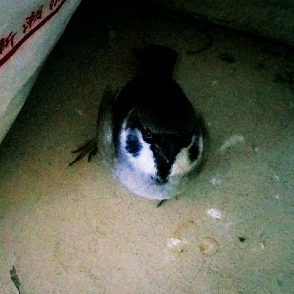 16-12-31 14:05     #小动物# 叼着纸在地下跑