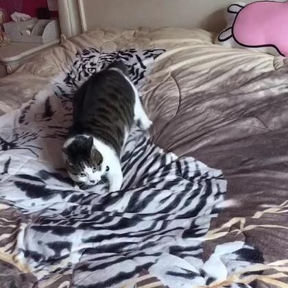 #宠物#一只被老虎附体的猫,是不是很应景?😆😆😆(深井冰)#搞笑#