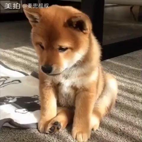 好忧伤的一只狗狗,真想安慰安慰它!😶❤😀