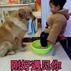 #宠物#刚好遇见你