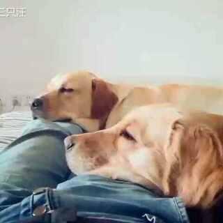 #宠物#午饭后☺☺(刚好这角度不拍看不到这么和谐一面,禁止吐槽爸爸😞小黑屋)