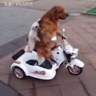 #宠物##搞笑##萌宠#