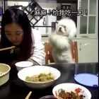 汪:我特么可能有一个假主人,揖作了这么长时间你好呆给一口吧!垃圾气死汪了!😂😂#宠物##囧囧趣闻#