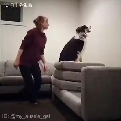 这只狗狗太聪明了。好可爱!主人教育的很好👍