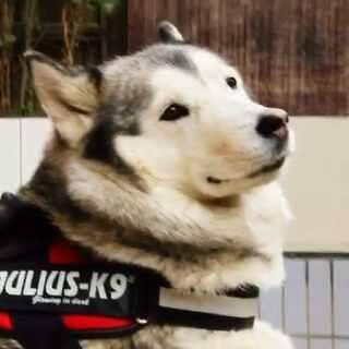 美拍视频_萌宠搞笑宠物_宠物表情-第4页-莫蒂瑞克和表情包图片