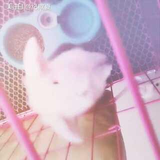 #家有萌宠#记录可爱的小生命#疯狂的垂耳兔##越狱兔#