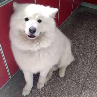 美拍表情_萌宠搞笑视频_表情宠物-第3页-买烟宠物包图片