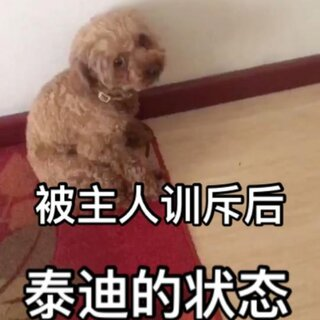 #萌宠##家有萌宠##宠物狗狗# 每次养个啥训完又心疼 无奈
