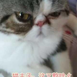 #神经病铲屎官##宠物#当我回放的时候,猫猫一只看着我,一脸嫌弃~ (′~`;)仿佛我是智障似的,现在想来确实是……
