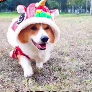 美拍视频_萌宠搞笑图片_动漫动态-美拍a视频大全宠物包表情搞笑表情宠物下载图片