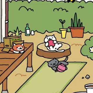 好多喵喵来玩呀!!#猫咪后院##我要上热门@美拍小助手##宠物#