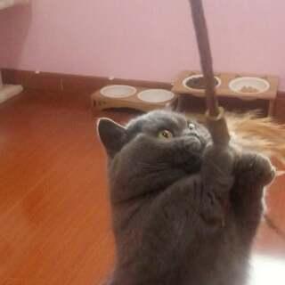 您有一个小可爱注意查收~#宠物#【我家店鋪:https://shop61141321.taobao.com】