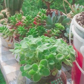??今日阳光甚好,??请大家欣赏一下我养在横店阳台的花花草草。??