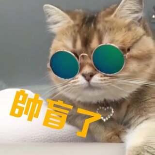 这只猫咪真的帅盲了#宠物##喵星人##耍帅时刻#