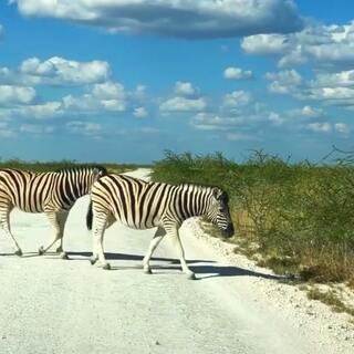 非洲自驾游之旅,简直不要太刺激。#精选##我要上热门##带着美拍去旅行#